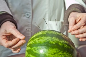 The breakthrough came in giving acupuncture to a watermelon.