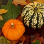 pumpkins and leaves Nov2014 newsletter